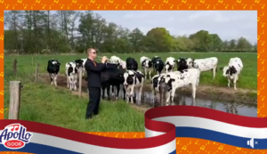 Het Wilhelmus Ruben tussen de koeien!